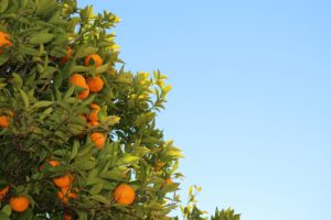 La mandarine mène la vie dure aux cheveux gras