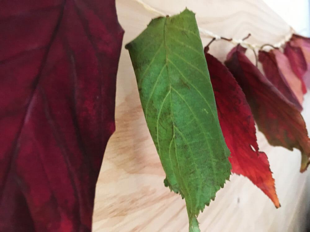 Article guirlande compostable