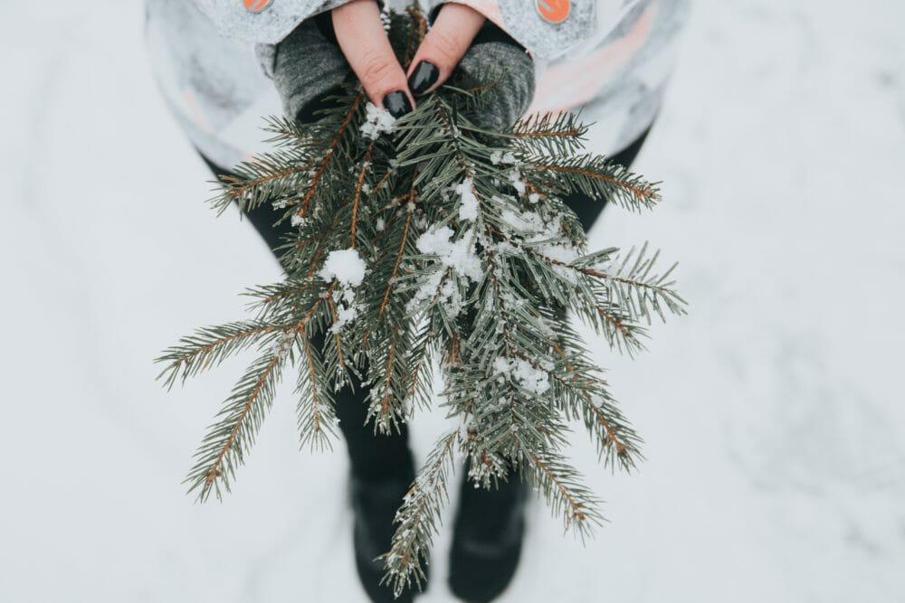 Sapin de Noel sans sapin